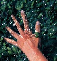 великолепные ванночки для рук